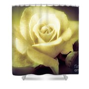 Yellow Rose Smoky Misty Look Shower Curtain