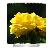 Yellow Rose Sunlit Rose Garden Landscape Art Baslee Troutman  Shower Curtain