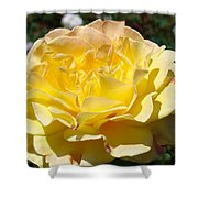 Yellow Rose Sunlit Summer Roses Flowers Art Prints Baslee Troutman Shower Curtain
