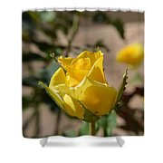 Yellow Rose With Ants Shower Curtain