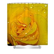 Yellow Rose With Droplets By Kaye Menner Shower Curtain