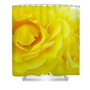 Yellow Roses Art Prints Botanical Giclee Prints Baslee Troutman Shower Curtain