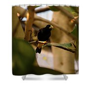 Yellow-rumped Cacique 3 Shower Curtain