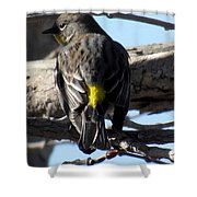 Yellow Rumped Warbler Shower Curtain