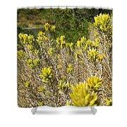 Yellow Sage Flower Shower Curtain