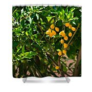 Yellow Seeds Shower Curtain