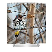 Yellow-shafted Northern Flicker Staying Warm Shower Curtain