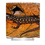Yellow Spotted Tropical Night Lizard Shower Curtain