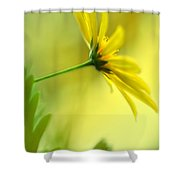 Yellow Spring Daisy Abstract By Kaye Menner Shower Curtain