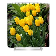 Yellow Spring Tulips Shower Curtain