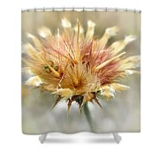 Yellow Star Thistle Shower Curtain by Valerie Anne Kelly