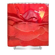 Yellow-striped Red Rose Shower Curtain