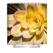 Yellow Succulent Shower Curtain