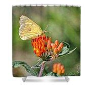 Yellow Sulphur Butterfly Shower Curtain