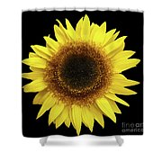 Yellow Sunflower Isolated On Black Background 8 Shower Curtain