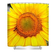 Yellow Sunflower With Bee Shower Curtain