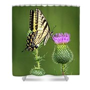 Yellow Swallow Tail Shower Curtain