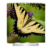 Yellow Swallowtail Shower Curtain