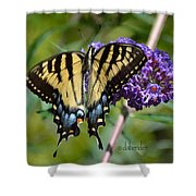 Yellow Swallowtail Butterfly Two Shower Curtain