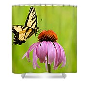 Yellow Swallowtail On Cone Flower Shower Curtain