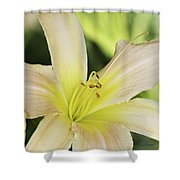 Yellow Tan Lily 1 Shower Curtain
