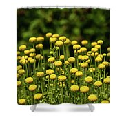 Yellow Tansy Shower Curtain