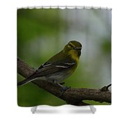 Yellow-throated Vireo On Branch Shower Curtain