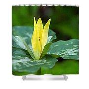 Yellow Trillium Flower Trillium Luteum Shower Curtain