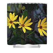 Yellow Trined Shower Curtain
