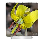 Yellow Trout Lily Shower Curtain