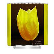 Yellow Tulip 3 Shower Curtain