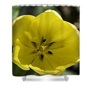 Yellow Tulip Center Squared Shower Curtain