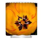 Yellow Tulip - Close Up Shower Curtain