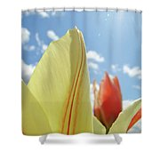 Yellow Tulip Flower Art Prints Spring Blue Sky Clouds Baslee Troutman Shower Curtain