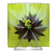 Yellow Tulip Macro Spring Floral Garden Baslee Troutman Shower Curtain