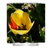 Yellow Tulip With Red Stripe Shower Curtain