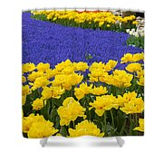 Yellow Tulips And Blue Muscari In Dutch Garden Shower Curtain