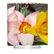 Yellow Tulips Art Prints Pink Tulips Spring Florals Baslee Troutman Shower Curtain