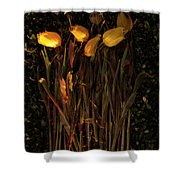 Yellow Tulips Decaying At Sunset Shower Curtain