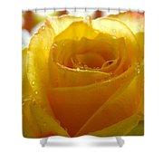 Yellow Valentine Roses - 4 Shower Curtain