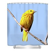 Yellow Warbler #1 Shower Curtain