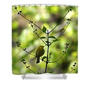 Yellow Warbler In A Tree 2 Shower Curtain