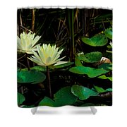 Yellow Water Lilies Shower Curtain