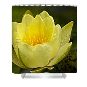 Yellow Water Lilly Shower Curtain