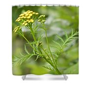 Yellow Wildflower Shower Curtain