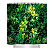 Yellow Wild Flowers In Late Summer Shower Curtain