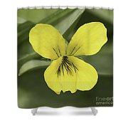 Yellow Wild Violet Shower Curtain