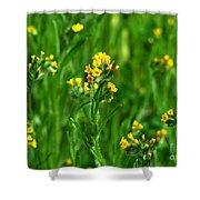 Yellow Wildflower Photograph Shower Curtain