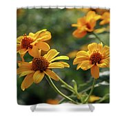 Yellow Wildflowers 3680 H_2 Shower Curtain