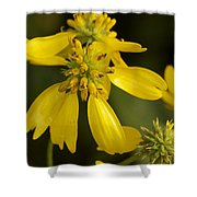 Yellow Wingstem Shower Curtain